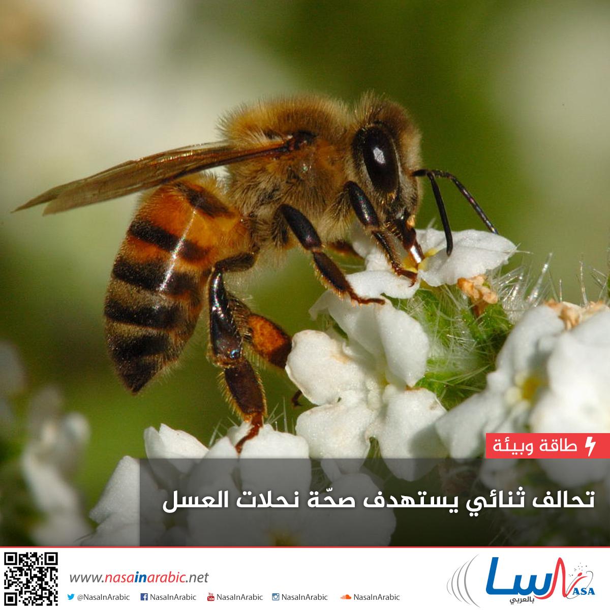 تحالف ثنائي يستهدف صحة نحل العسل