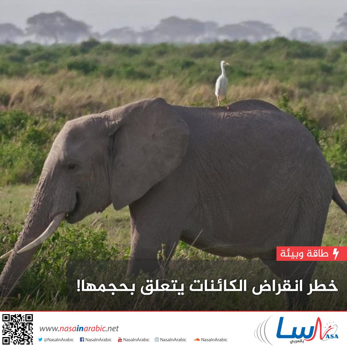 خطر انقراض الكائنات يتعلق بحجمها!