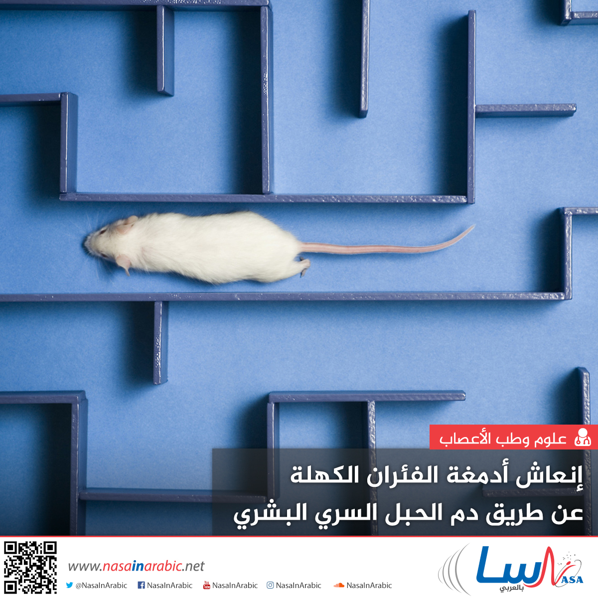 إنعاش أدمغة الفئران الكهلة عن طريق دم الحبل السري البشري