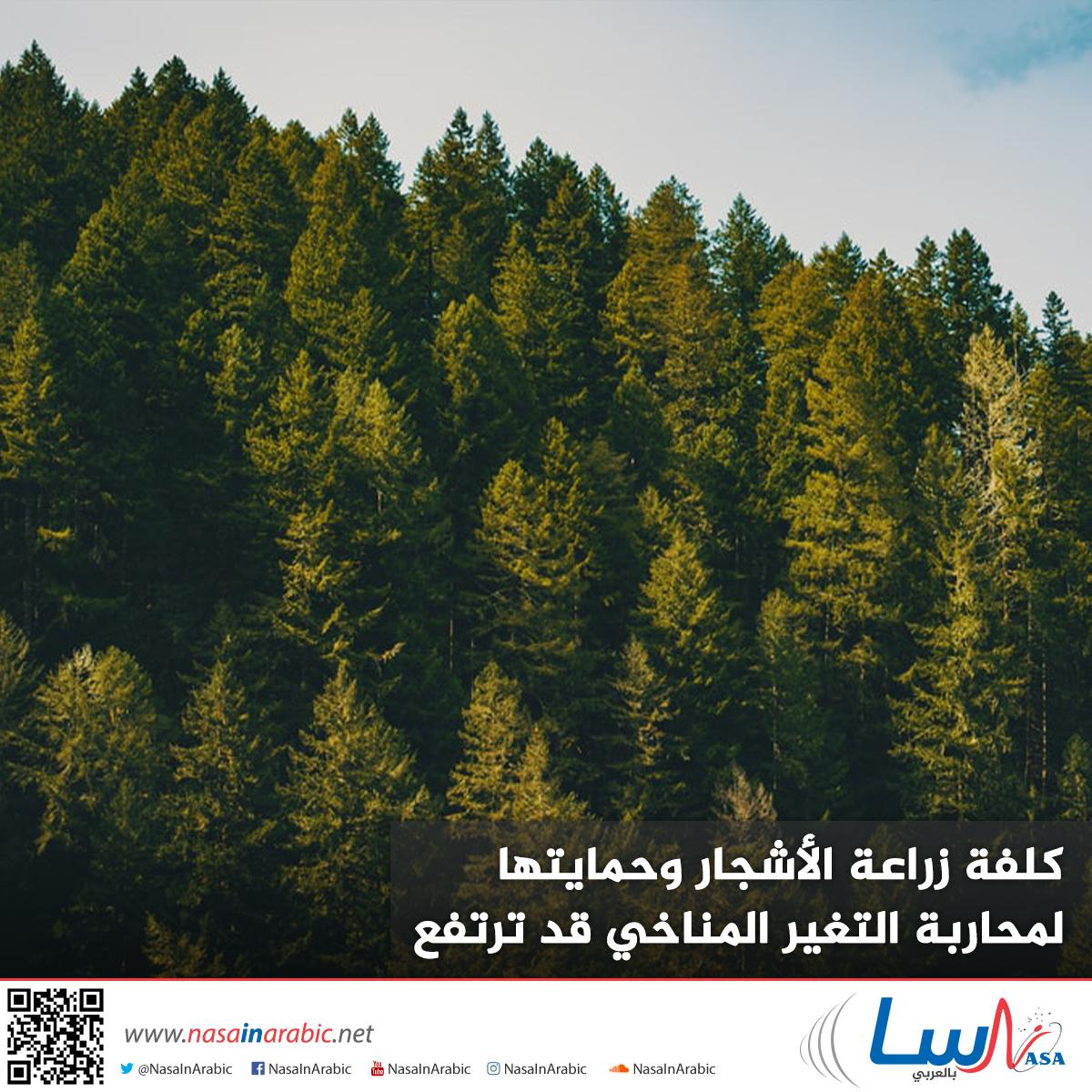 كلفة زراعة الأشجار وحمايتها لمحاربة التغير المناخي قد ترتفع