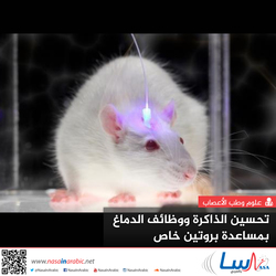 تحسين الذاكرة ووظائف الدماغ بمساعدة بروتين خاص