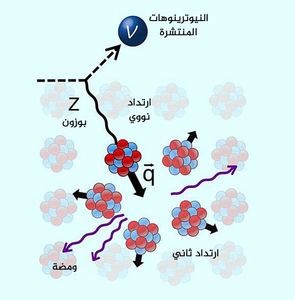 الانتشار المرن المتماسك لنواة النيوترينو  حقوق الصورة: COHERENT collaboration.