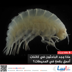 ماذا وجد الباحثون في كائنات أعمق بقعة في المحيطات؟