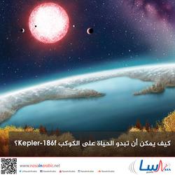 كيف يمكن أن تبدو الحياة على الكوكب Kepler-186f؟