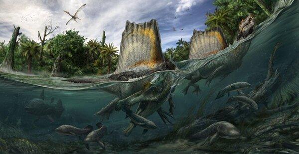 السحلية الشوكية Spinosaurus آكلة الأسماك، ذات الظهر الشراعي. (حقوق الصورة: Davide Bonadonna)