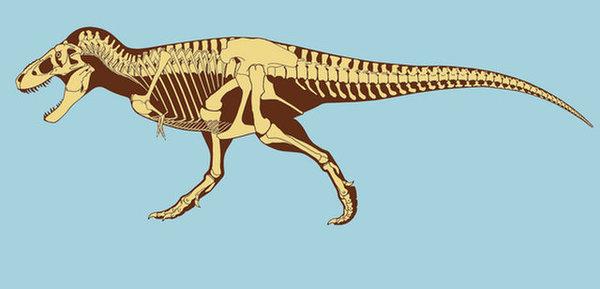 صورة فنية تكشف عن الهيكل العظمي للتيركس. حقوق الصورة: Scott Hartman / All rights reserved