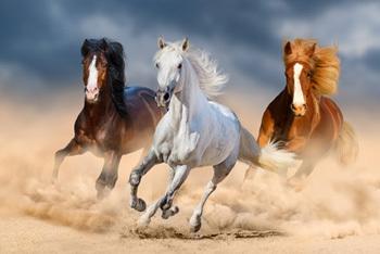 ليس بالضرورة أن تبقى الخيول خيولاً دوماً