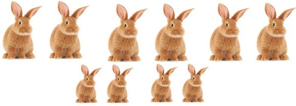 أنجب الزوجان البالغان من الأرانب زوجاً من الأطفال