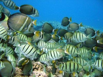 إلى أي الطرق هم ذاهبون؟ اكتشف كيفية محاكاة سلوك الأسماك.
