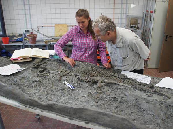 تانيا فينتريش Tania Wintrich ومارتن ساندر Martin Sander مع أحفورة الرايتكوصور. تصوير: Yasuhisa Nakajima