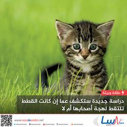 دراسة جديدة ستكشف عما إن كانت القطط تلتقط لهجة أصحابها أم لا