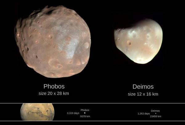 الأحجام النسبية لقمري المريخ، فوبوس وديموس، الشبيهان بالكويكبات. المصدر: NASA / JPL-Caltech.