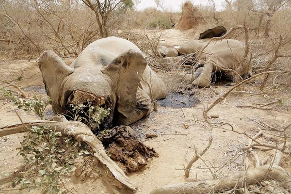 جيفة فيل تمَّ تفجير رأسه إلى أشلاء. رويترز