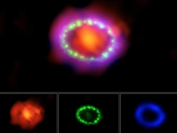 في الصورة التالية، يظهر المستعر النجمي SN 1987A بثلاثة أطوال موجية مختلفة للضوء وهي: الأشعة تحت الحمراء (الأحمر والبرتقالي) والأشعة المرئية (الأخضر)وأشعة إكس (الأزرق والبنفسجي). NASA/ESA/NRAO/AUI/NSF; Hubble; Chandra; ALMA