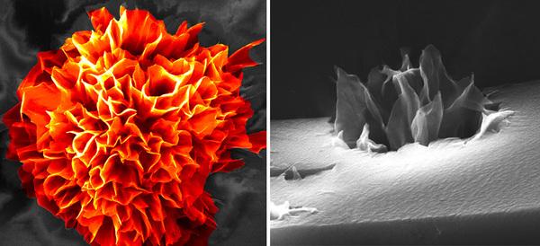 تفتّحٌ مشرقٌ: تجمّعٌ ذاتي للزهور النانويّة