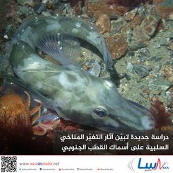دراسة جديدة تبيّن آثار التغيّر المناخي السلبية على أسماك القطب الجنوبي