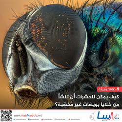 كيف يمكن للحشرات أن تنشأ من خلايا بويضات غير مخصبة؟
