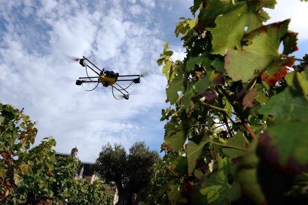 طائرة بدون طيار تراقب كروم العنب في فرنسا . ملكية الصورة: جان بييرمولر / صور غيتي .