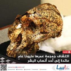 اكتشاف جمجمة عمرها مليونا عامٍ، عائدة إلى أحد أنساب البشر