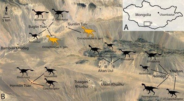 حوض نيميغت في منغوليا والذي يمثل مركزاً للأوفيرابتوروصور. تمثل الظلال الصفراء المواطن المعروفة (إلى اليمين) والمواطن المحتملة (اليسار) للنوع الجديد من الديناصورات. حقوق الصورة: GREGORY FUNSTON, UNIVERSITY OF ALBERTA
