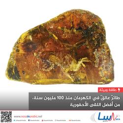 طائرٌ عالقٌ في الكهرمان منذ 100 مليون سنة، من أفضل اللُقى الأحفورية