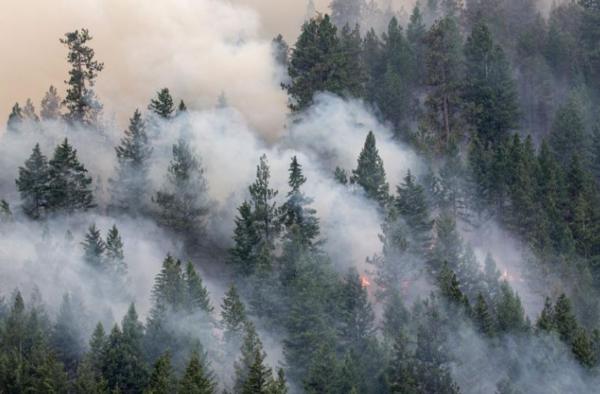ظلت الساحل الغربي للولايات المتحدة في حالة جفاف منذ سنوات. أدى الطقس الجاف الحار إلى زيادة شدة حرائق الغابات وتدميرها. حقوق الصورة: Photograph By Paul Nicklen, Nat Geo Image Collection