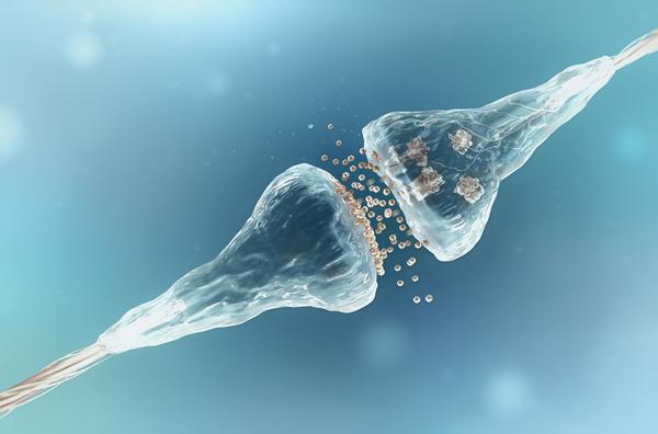 الكوكائين يؤثر على قوة التشابكات العصبية في منطقة من الدماغ تسمى النواة المتكئة. حقوق الصورة:adike/Shutterstock