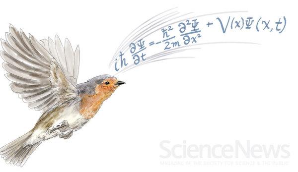 علم الأحياءالكمومي