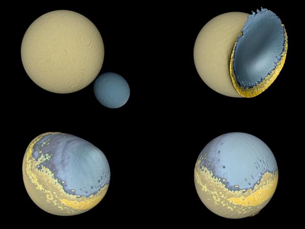 الاصطدام اللطيف : كيف تشكل القمر؟  تظهر هذه المحاكاة للاصطدام الذي حصل بين القمر البدئي والقمر المرافق كيف التصقت الكتلتان القمريتان معاً مشكلتين نصفي كرة غير متناظرين، ووفقاً لعالم الكواكب إيريك أسفوغ فإن هذه العملية تفسر سبب كون القمر ذو شكل غير متناظر بين نصفيه. حيث تشير الألوان التالية إلى الطبقات فالقشرة بلون أزرق فاتح، والغطاء بلون أزرق داكن، وطبقة من مادة مكونة للغطاء العلوي بلون أصفر وتمثل محيطاً من الماغما (الصخور المنصهرة). التحم أغلب القمر المرافق كطبقة مشابهة لشكل الفطيرة مشكلة منطقة جبلية تقابل الأراضي المرتفعة على الجانب البعيد للقمر. المصدر M. Jutzi (U. Bern), E. Asphaug (ASU, UCSC)