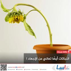 النباتات أيضًا تعاني من الإجهاد !