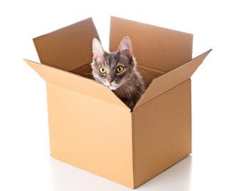 قادت فكرة التراكب عالم الفيزياء أرفين شرودينجر إلى الاعتقاد بأن قطة موجودة داخل صندوق ستكون ميتة وحية في الوقت نفسه طالما لم تنظر داخل الصندوق (هذه القطة على قيد الحياة بالتأكيد!).