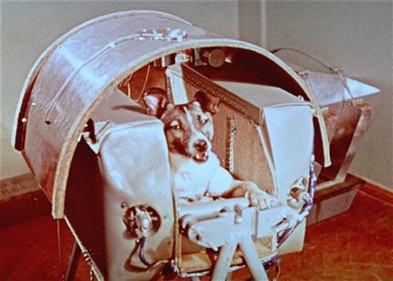 صورةٌ أخذت لكلبة الفضاء المشهورة لايكا، وذلك قبل انطلاقها في عام 1957. Credit: AP Photo/NASA حقوق الصو