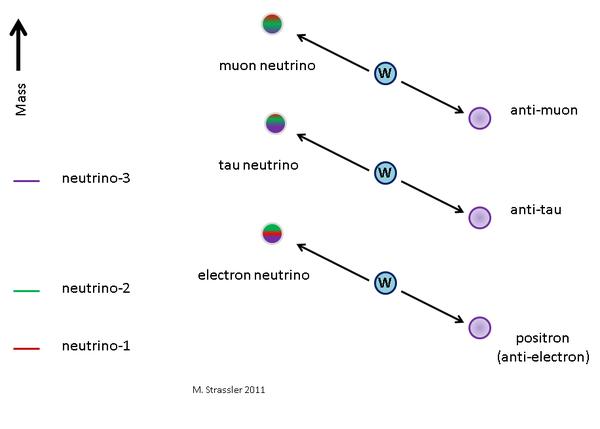 """إلى اليسار، نيوترينوهات نوع الكتلة (نيوترينو1، ونيوترينو2، ونيوترينو3) لها كتل محددة (لا تزال غير معروفة، على الرغم من أن بعض الاختلافات في """"تربيعات"""" (squares) كتلها معروفة من خلال القياسات المبينة أدناه) وإلى اليمين: نيوترينوهات نوع التفاعل الضعيف (الإلكترون نيوترينو والميون نيوترينو، والتاو نيوترينو)، التي سميت تبعاً للبتونات المشحونة التي تصاحبها عند تفاعلها مع جسيمات W موجبة الشحنة، وهي ناقل القوة النووية الضعيفة. ونيوترينو الإلكترون، هو مزيج من نيوترونات النوع الكتلي الثلاثة، في حين أن نيوترينو3 هو مزيج من النيوترينوات من نوع التفاعل الضعيف."""
