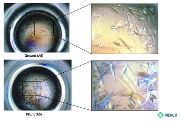 الفرق بين بلورات البروتين على الأرض (في الأعلى)، وتحت الجاذبية الميكروية (في الأسفل). المصدر: Merck