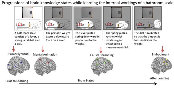 تعاقب مراحل المعرفة العقلية أثناء تعلم الآلية الذاتية لعمل ميزان الحمام