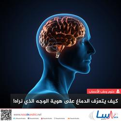 كيف يتعرّف الدماغ على هوية الوجه الذي نراه!