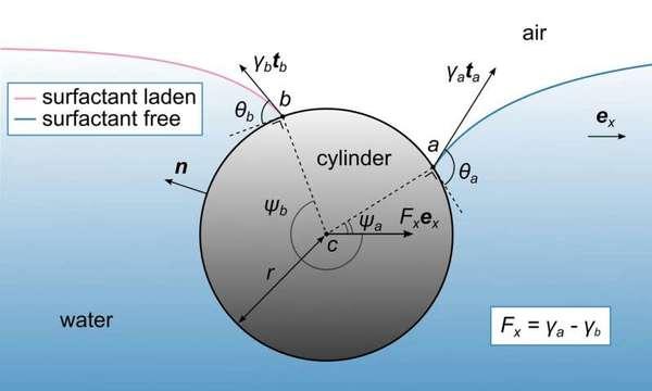 مخطط إجمالي يُستخدم لوصف الفيزياء الكامنة وراء تفاعل أسطوانة مغمورة جزئيًا مع الماء بوجود عامل سطحي على الجانب الأيسر فقط. بوجود العامل السطحي على الجانب الأيسر من سطح المياه، نحصل على أسطح غير متماثلة تُوصف بمنحنيات مختلفة، مما يؤدى إلى اختلاف القوى المؤثرة على الاسطوانة. وتساوي المركبة الأفقية للقوى المؤثرة على الاسطوانة الفرق بين التوترات السطحية تمامًا، وذلك عند قياسه لكل وحدة طول من الأسطوانة. حقوق الصورة: Okinawa Institute of Science and Technology Graduate University – OIST