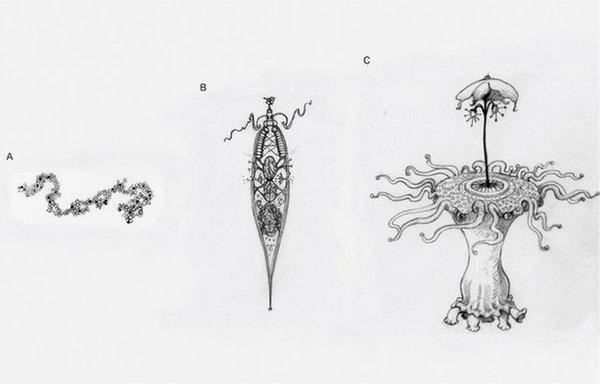 هذه الرسوم التوضيحيّة أدناه تمثّل مستوياتٍ مختلفةٍ من التعقيد التكيّفيّ الذي يمكن أن تمرّ به الحياة الفضائيّة، بدءًا من جزيءٍ بسيطٍ متضاعفٍ، مع عدم وجود هيكليّةٍ واضحةٍ كما في الشكل (A)، إلى كائنٍ بسيطٍ يشبه الخلية يمرّ بالانتقاء الطبيعيّ (B)، أو كائنٍ فضائيٍّ مع العديد من الأجزاء المعقّدة تعمل معًا (C).