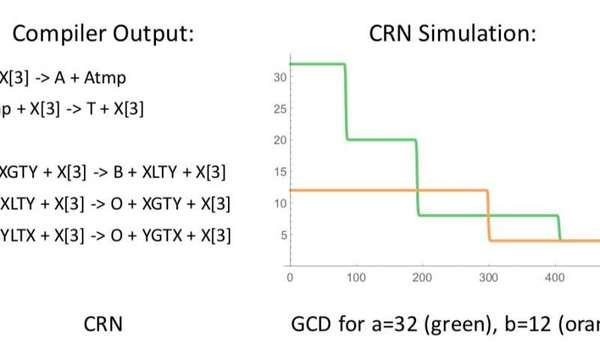 مخرجات المترجم البرمجي (Compiler)، كذلك، نتائج محاكاة برنامج الCRN++. حقوق الصورة: Vasic et al