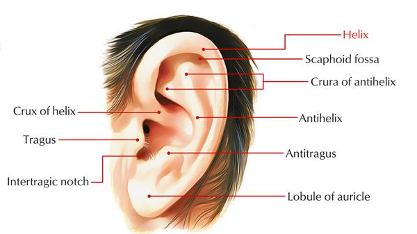 الأذن