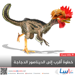 خطوة أقرب إلى الديناصور الدجاجة
