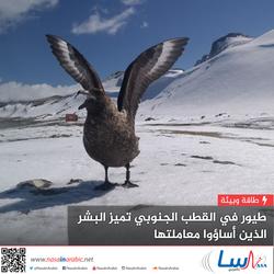 طيور في القطب الجنوبي تميز البشر الذين أساؤوا معاملتها وتهاجمهم وفقًا لذلك