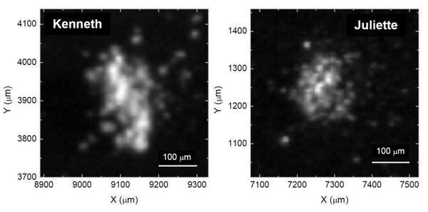 صووووووووورررررررةةةةةةة : يمثل الشكل السابق صورةً لاثنتين من حبيبات الغبار التي جمعها وحللها COSIMA، وسميت الحبيبتان كينيث وجولييت.  تُظهر الصورة وجود جزيئاتٍ عضويةٍ يدخل الكربون في تركيبها. جمعت هذه الجزيئات في أيار/مايو وتشرين الأول/أكتوبر عام 2015 على الترتيب.   مصدر الصورة: ESA/Rosetta/MPS for COSIMA Team MPS/CSNSM/UNIBW/TUORLA/IWF/IAS/ESA/BUW/MPE/LPC2E/LCM/FMI/UTU/LISA/UOFC/vH&S/ Fray et al (2016