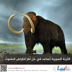 التربة السورية تساعد في حل لغز انقراض الماموث