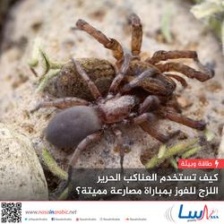 كيف تستخدم العناكب الحرير اللزج للفوز بمباراة مصارعة مميتة؟