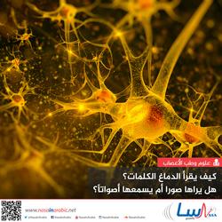 كيف يقرأ الدماغ الكلمات؟ هل يراها صوراً أم يسمعها أصواتًا؟