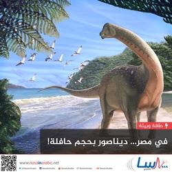 في مصر: ديناصور بحجم حافلة!
