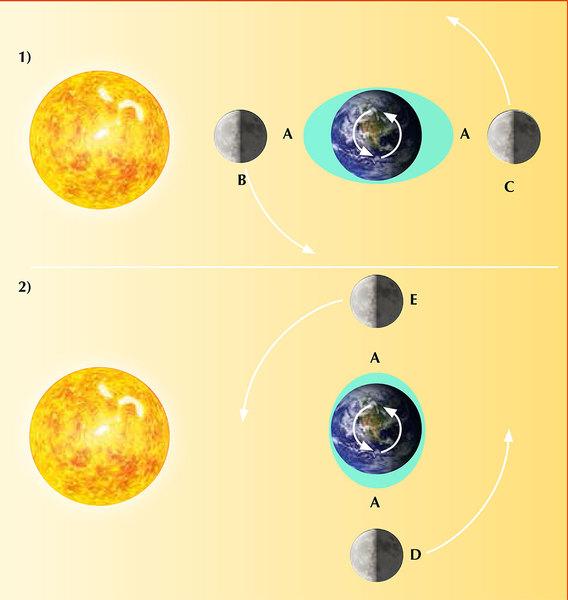 تساهم كل من الشمس والقمر في حدوث ظاهرة المد والجزر على سطح الأرض، وذلك عندما يمارسان الجذب الثقالي عليها. تتسبب قوة الجذب الثقالي للقمر في ارتفاع مياه المحيطات نحوه، كما يحدث ارتفاع آخر على الجانب المعاكس وذلك نظرا لأن الأرض يتم سحبها باتجاه القمر (وبعيداً عن الماء في الجانب البعيد). وبسبب دوران الأرض فإن هذه الارتفاعات تحدث مرتين يومياً (المد العالي A) في أي مكان على سطح الأرض.  تتبع ظاهرة المد والجزر نمطاً معيناً مرتبطاً بدورة القمر. فعندما تحدث المحاذاة بين القمر والشمس (القمر الجديد B أو عندما يكون القمر بدراً C) تصبح قوة الجذب الثقالي لكليهما أقوى بكثير، كما يصل المد إلى أعلى مستوى له (المد الربيعي). عندما يكون القمر في الربع الأول (D) أو الربع الثالث (E)، فإن المد يكون في أدنى مستوى له ويسمى المد المنخفض Neap tide . المصدر: Nicola Graf