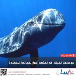 خوارزمية الحيتان قد تكشف أسرار لهجاتها المتعددة