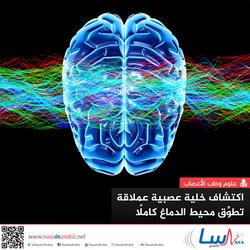 اكتشاف خلية عصبية عملاقة تطوِّق محيط الدماغ كاملًا